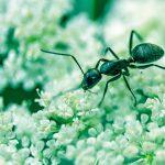 Acabemos con las hormigas de las plantas
