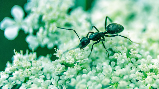acabemos con las hormigas de las plantas – ana duran