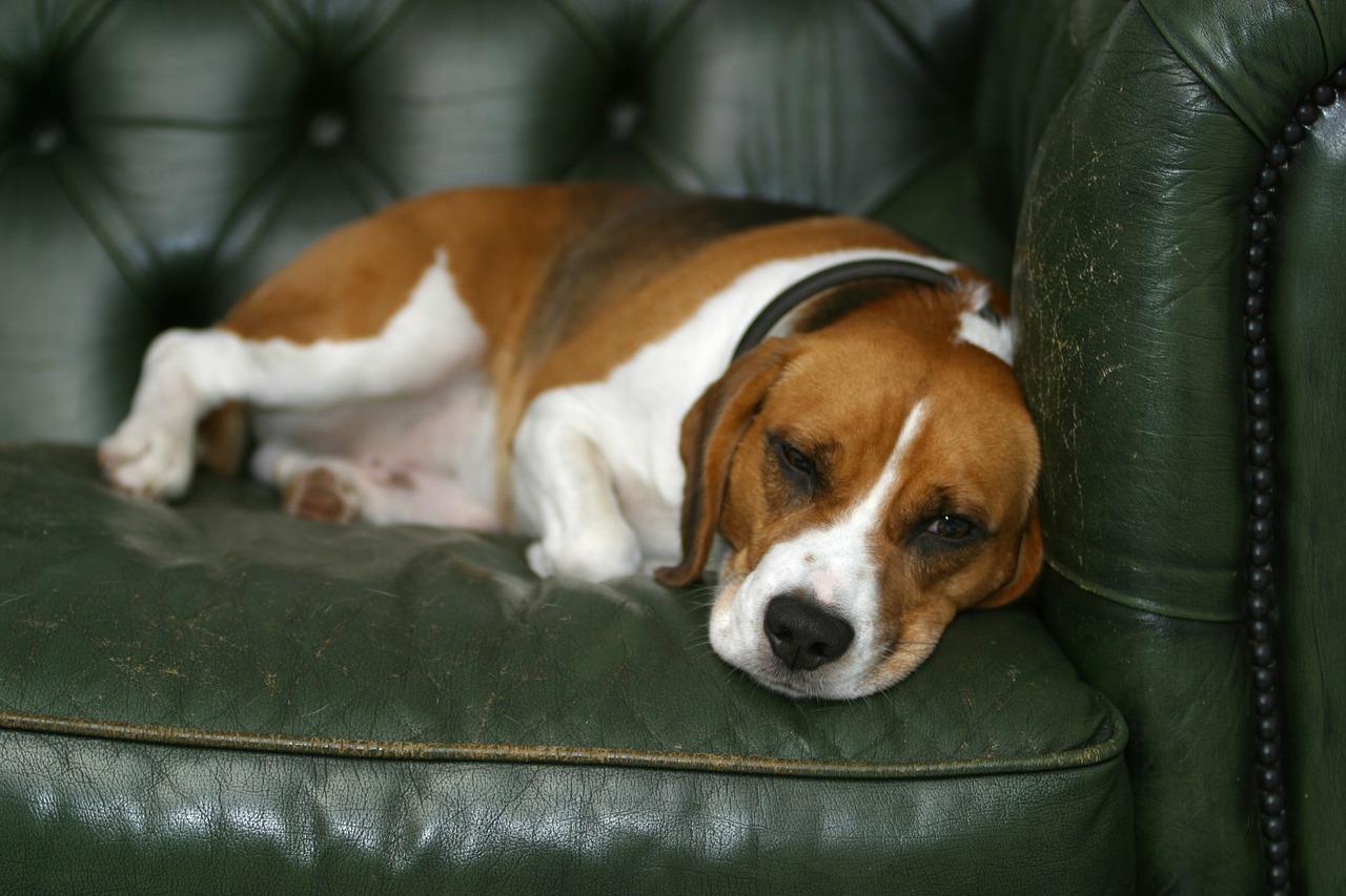 dog-190292_1280