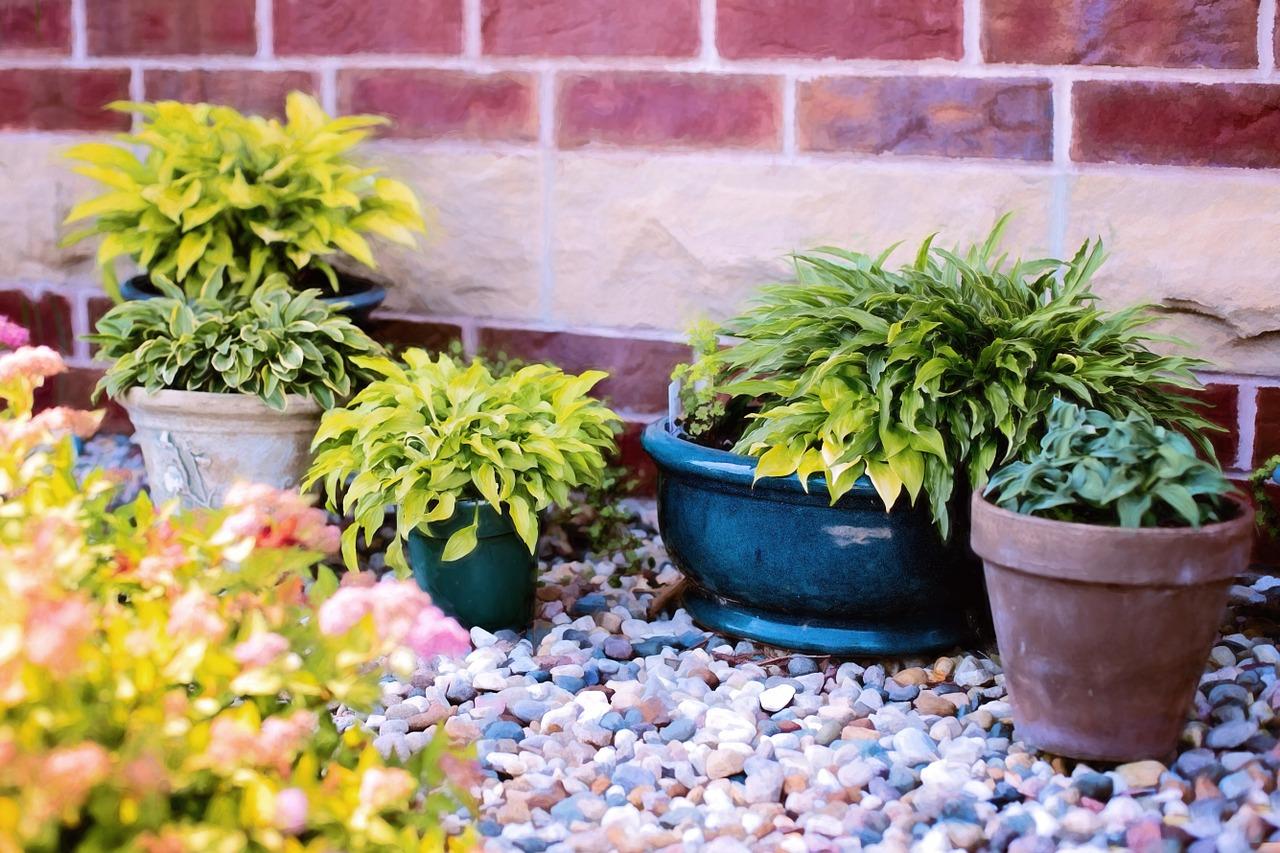 plants-in-pots-818718_1280